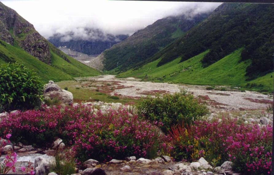 Valley Of Flowers National Park, Uttranchal Pradesh, India; Actual size=150 pixels wide